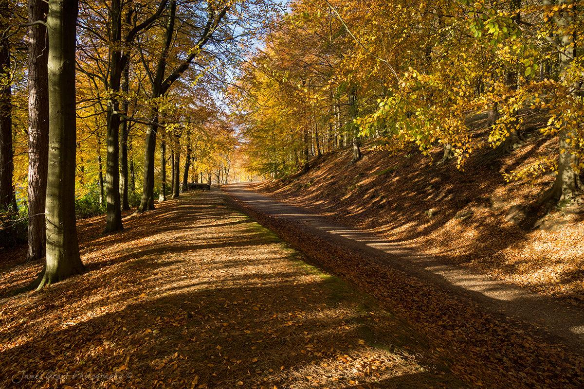 Avenue of Autumn - Peak District Photography