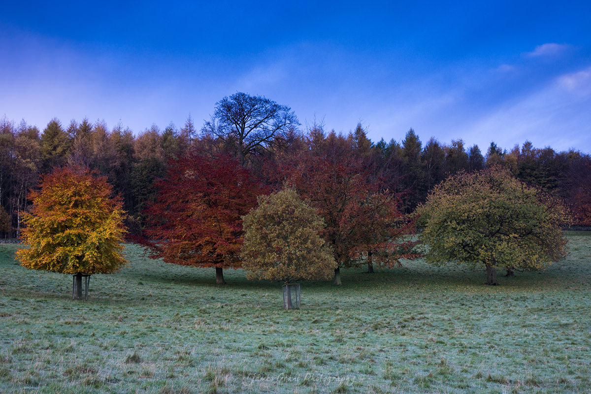 Chatsworth Autumn Trees - Peak District Photography