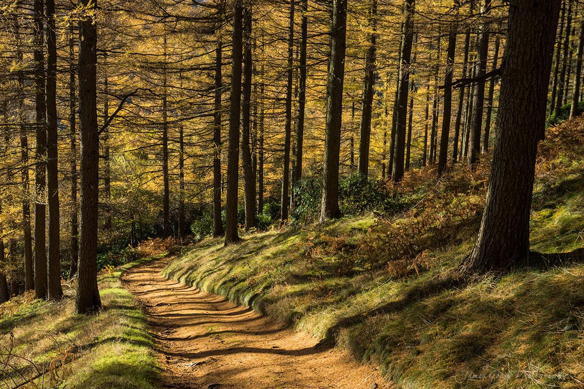 Nether Hay Autumn - Peak District Photography