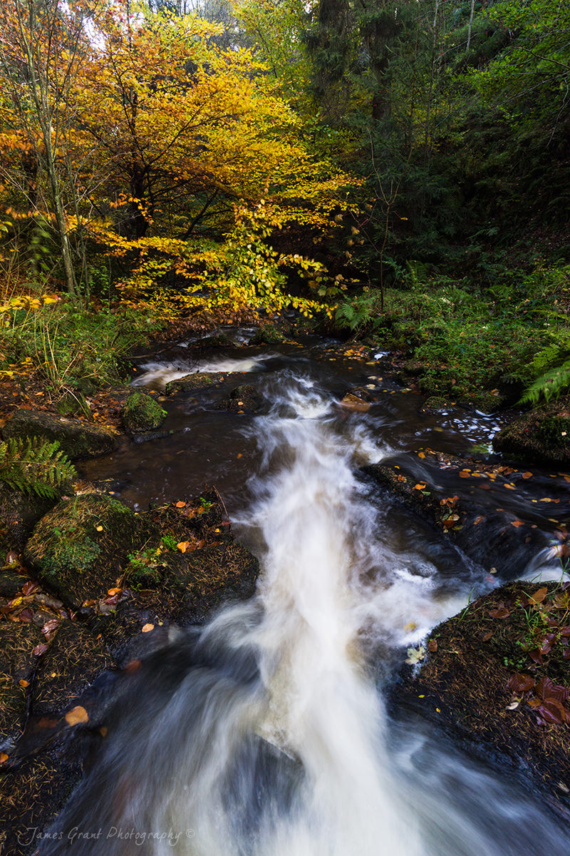 Wyming Brook Autumn Tree - Peak District Photography
