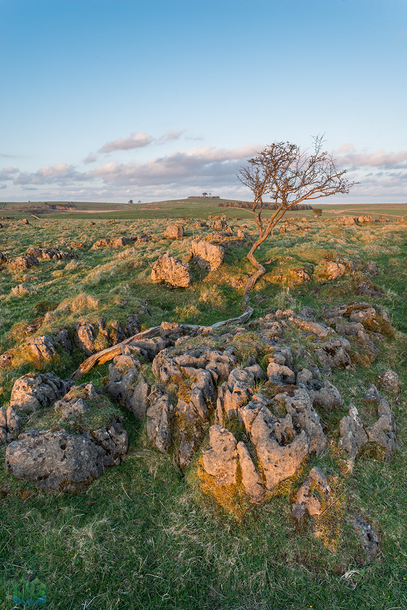 Roystone Rocks Crazy Tree - Peak District Landscape Photography