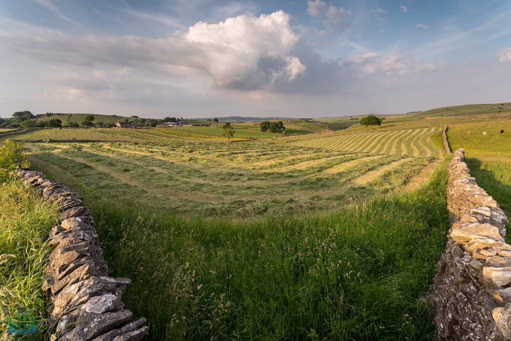 Litton Fields - Rural Peak District Photography