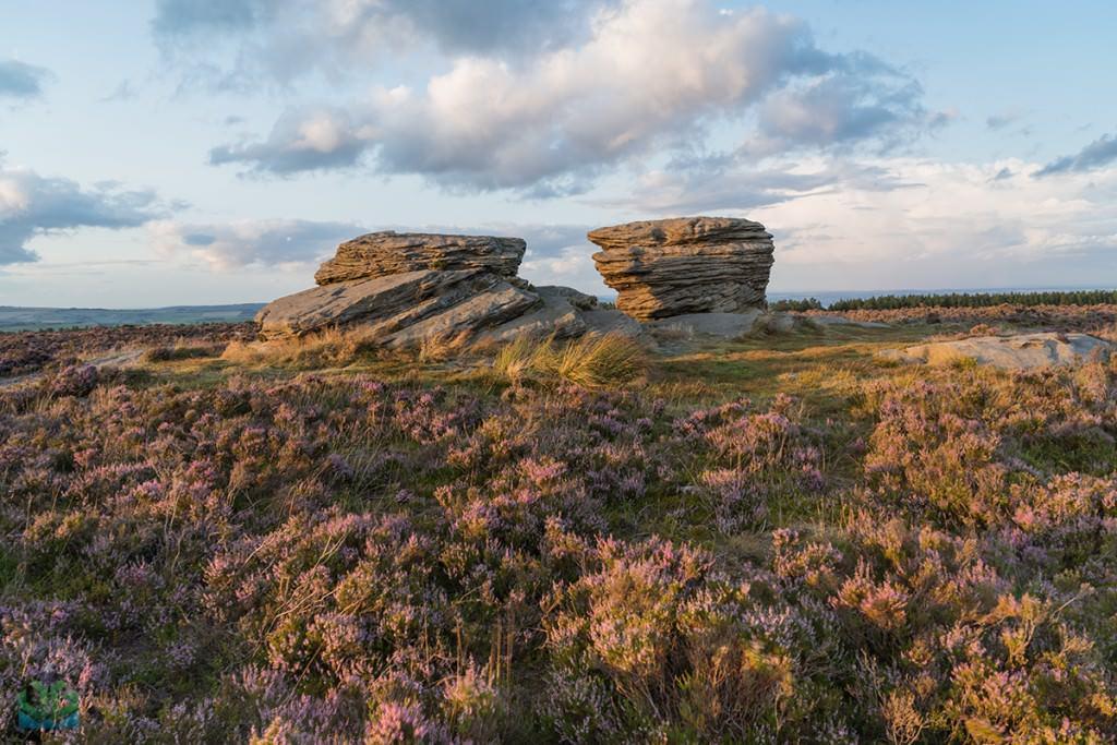 Ox Stones Heather - Burbage Moor - Peak District Photography