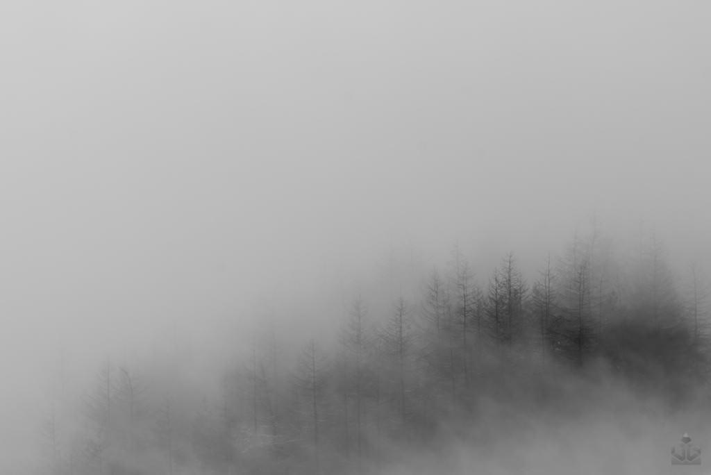 Mam Tor Misty Trees - Peak District Photography