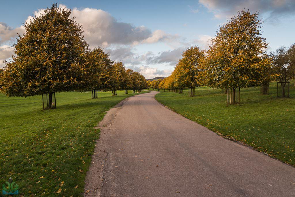Chatsworth Autumn Trees - Autumn In The Peak District