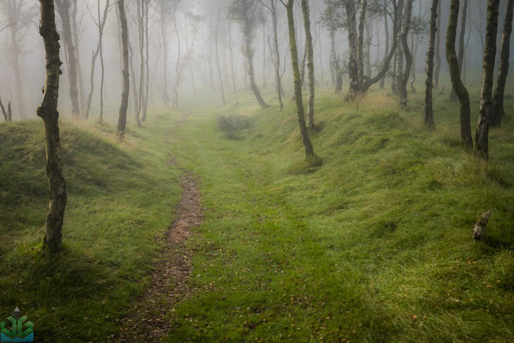 Bolehill Woods in the Fog - Peak District Photography