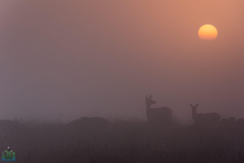 Deers on Curbar Edge - Autumn In The Peak District