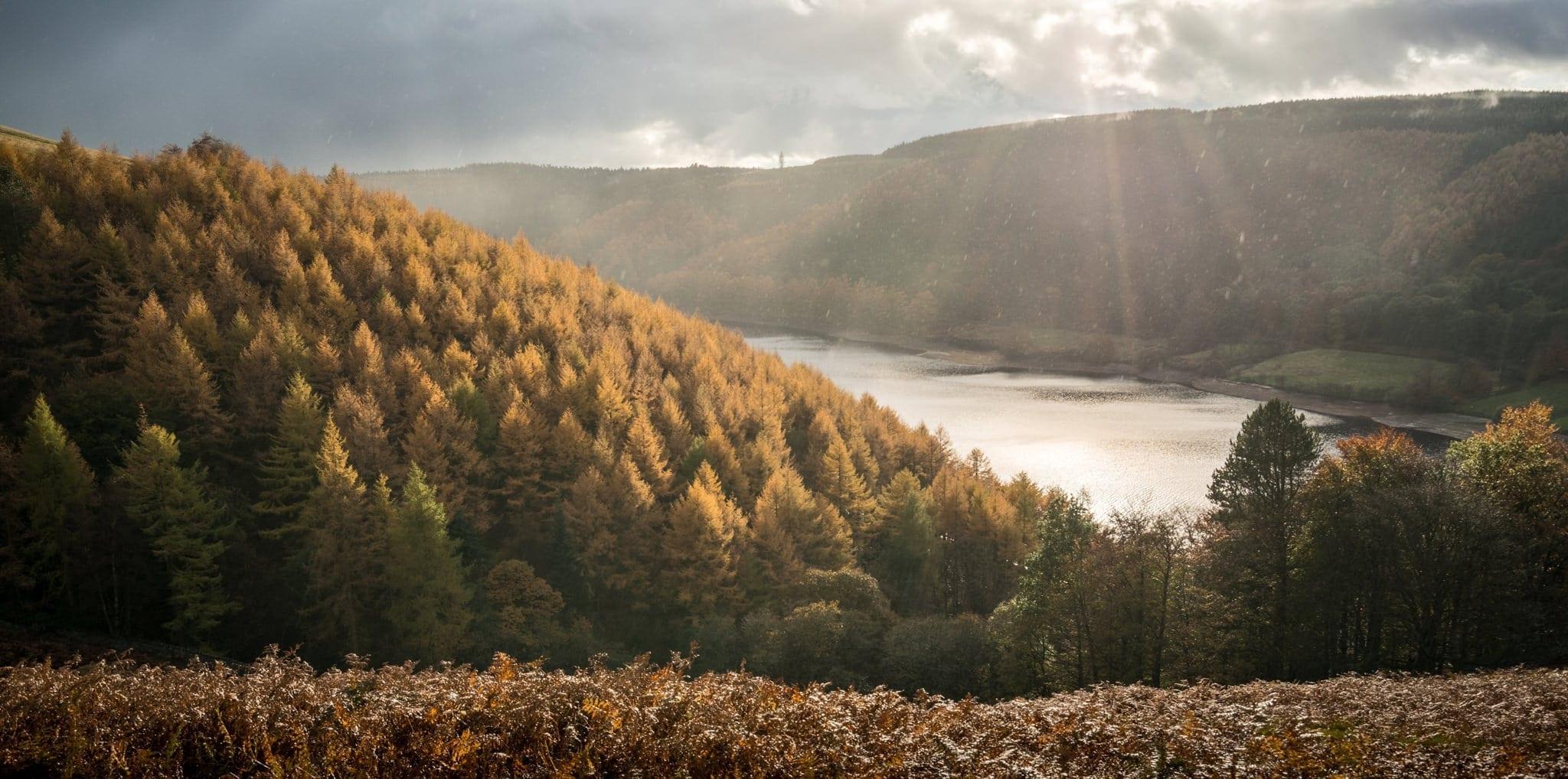 Abbey Bank Autumn - Peak District Photography