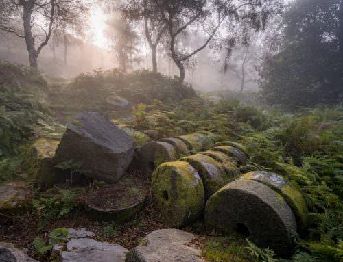 Bole Hill (Bolehill) Woods