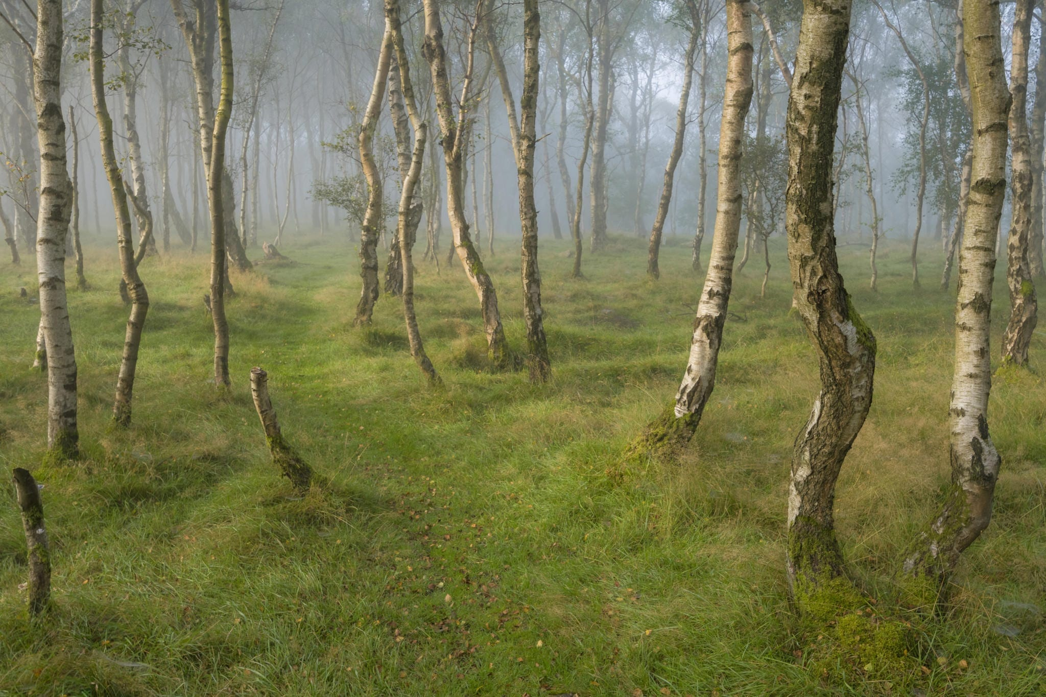 Bole Hill Woods in the Fog - Autumn in the Peak District Photography Workshop