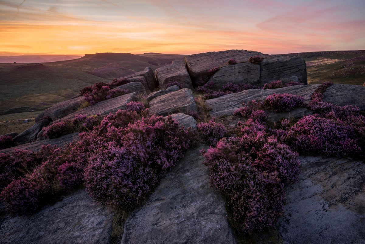 Burbage Rocks Afterglow - Heather in the Peak District Photography Workshop