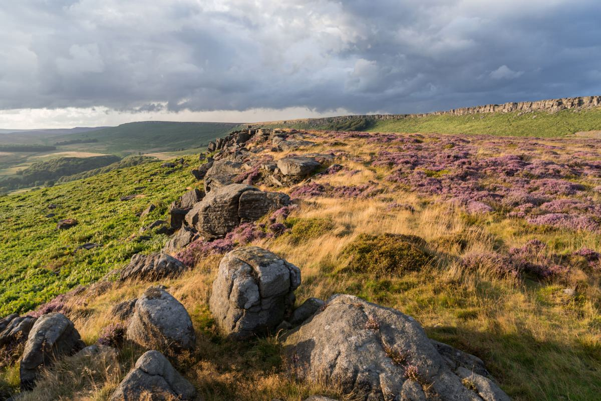 Carhead Rocks Heather - Heather in the Peak District Photography Workshop