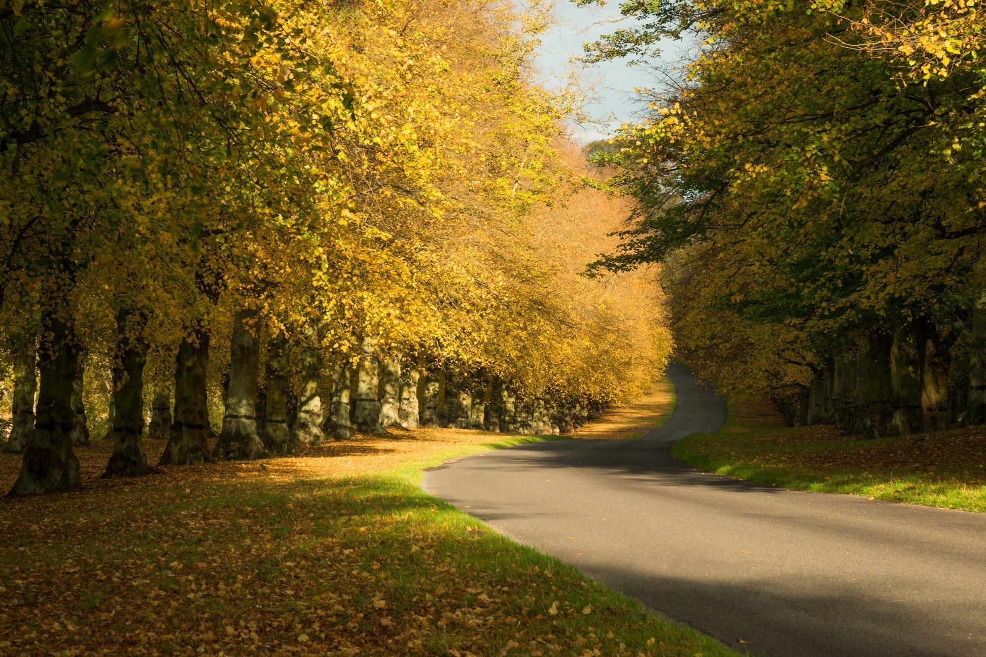 Clumber Park Autumn - Nottinghamshire Photography
