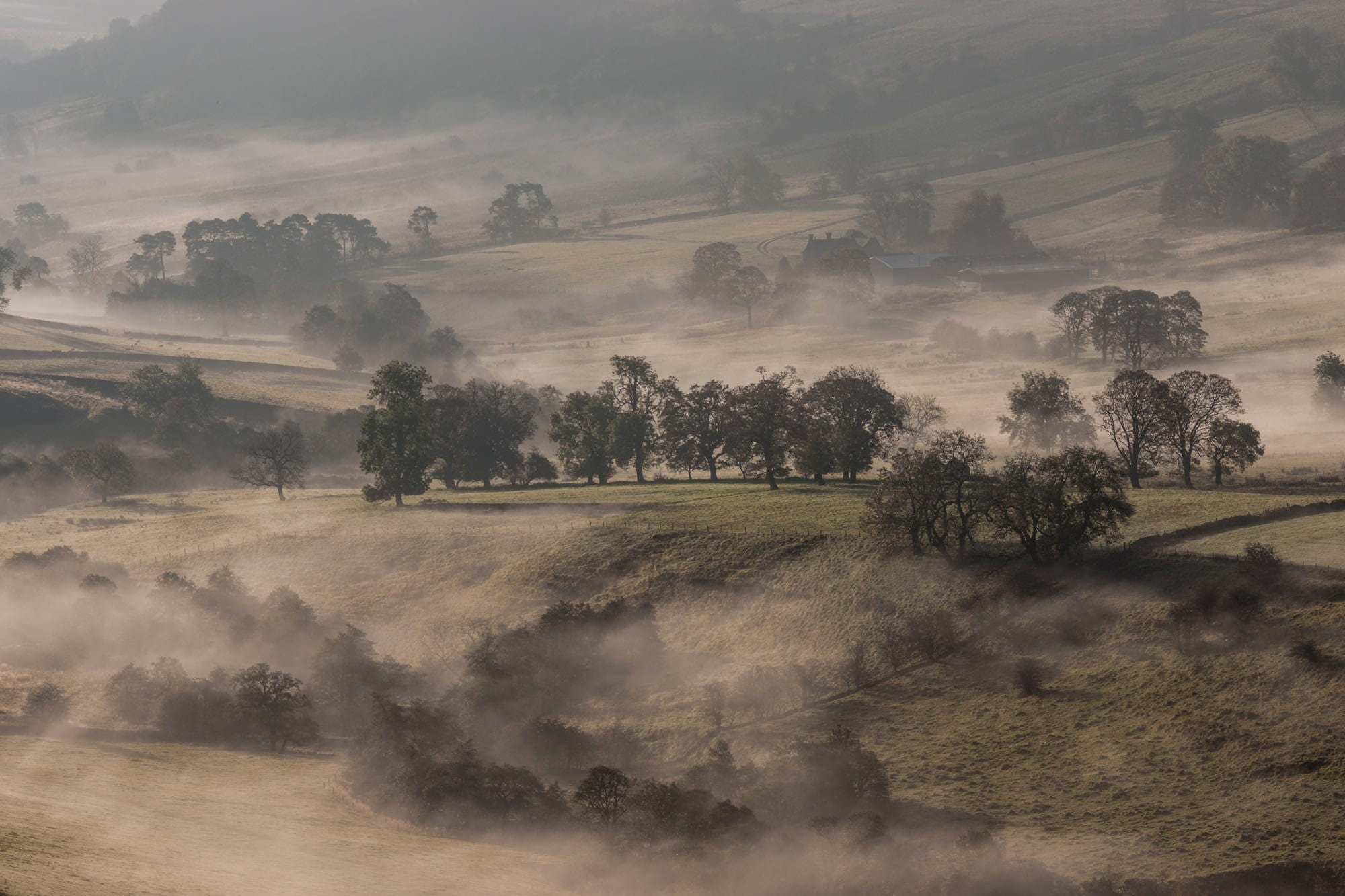 Crowdecote Trees in the Mist - Peak District Through The Lens Photography Workshop