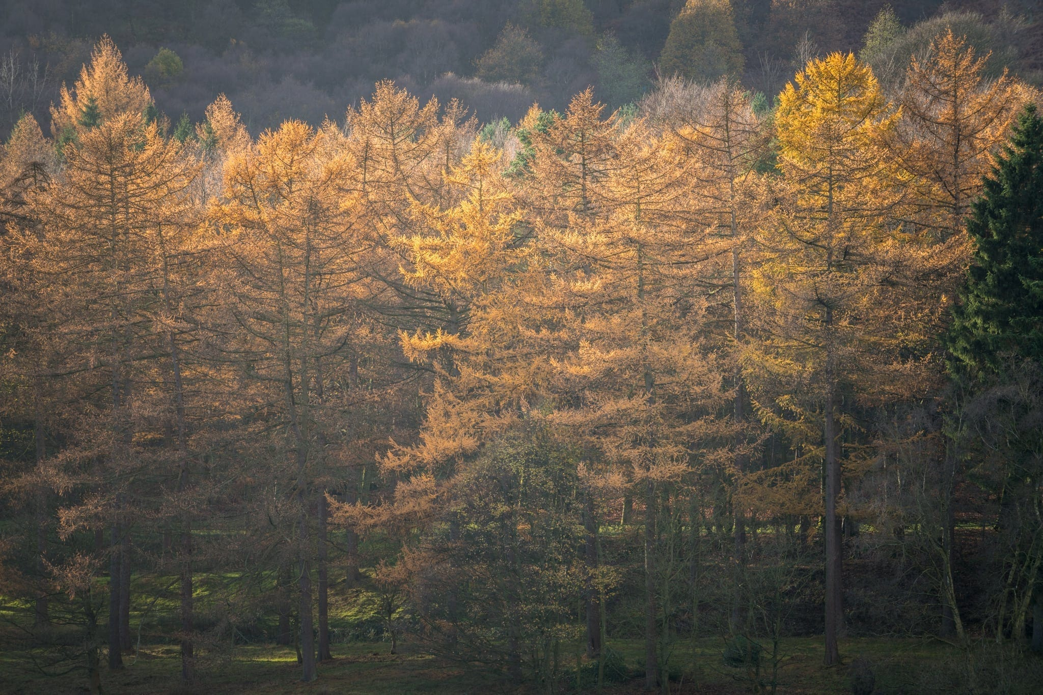 Derwent Reservoir Autumn Trees - Peak District Photography