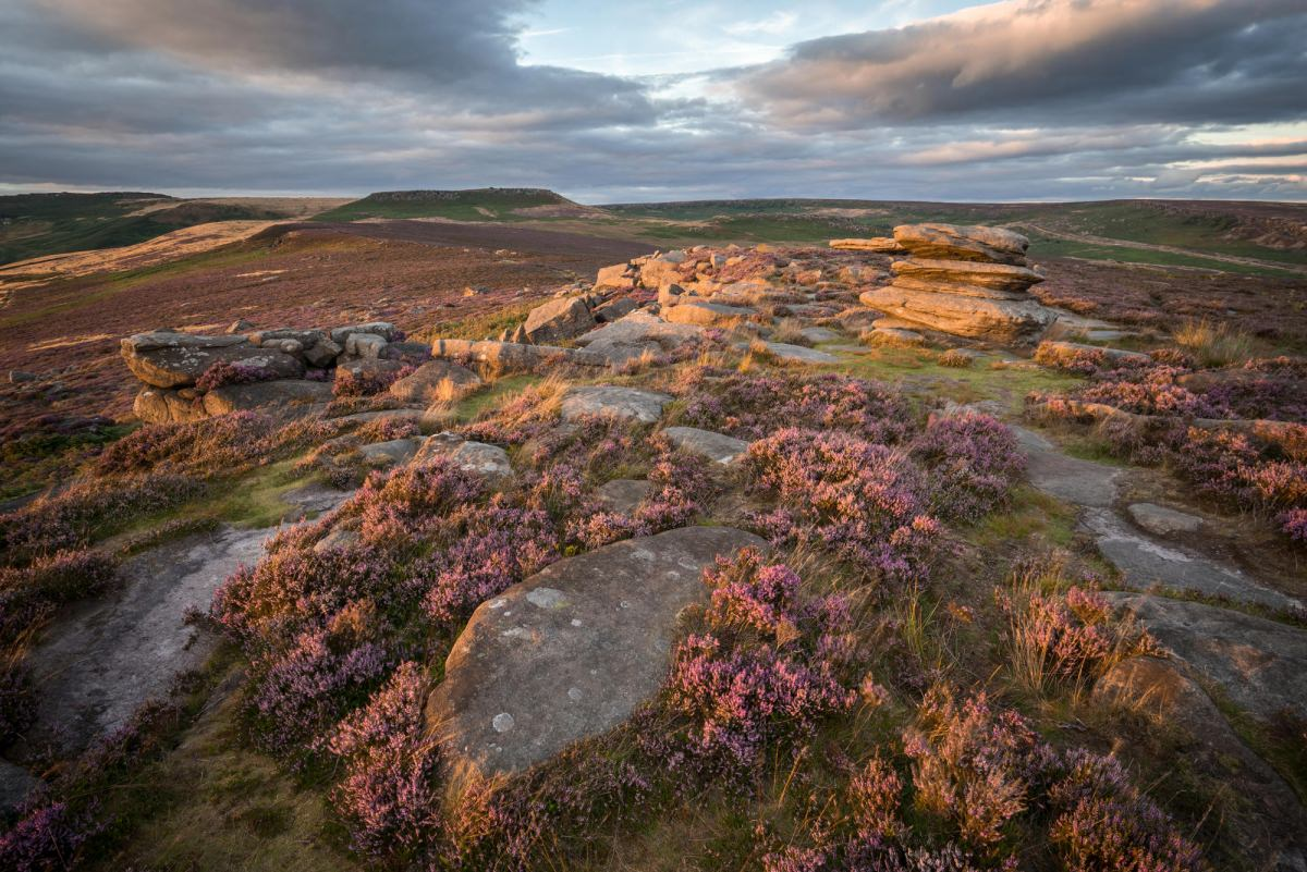 Over Owler Tor Sunset - Heather in the Peak District Photography Workshop