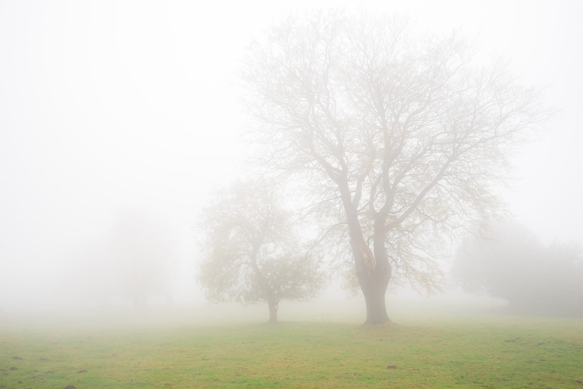 Stanton Moor Trees in the Mist - Peak District Photography
