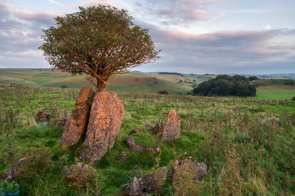 Roystone Rocks. A Weird and wonderful place. While photographing the sunset there, I was taken back by the red light hitting these two slabs of rock with the tree growing out of them. I also loved the soft light hitting the distance. Such a unique place.