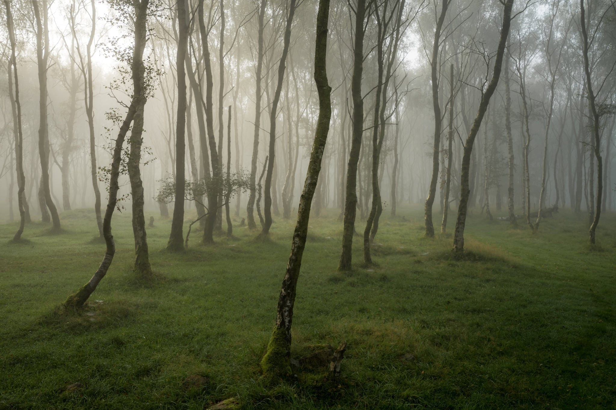 Bole Hill Woods in the Mist - Autumn in the Peak District Photography Workshop