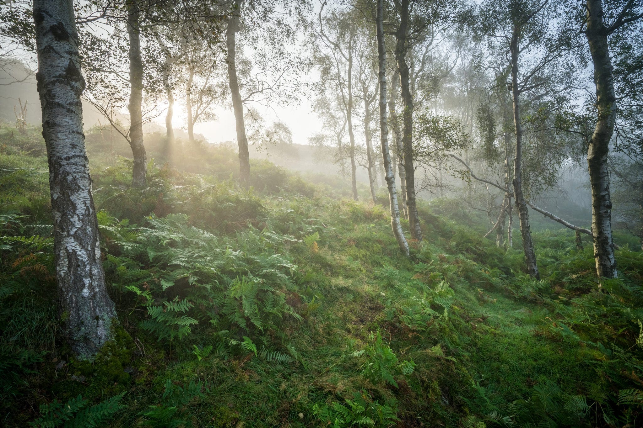 Bole Hill Woods in the Fog - Peak District Photography Workshop