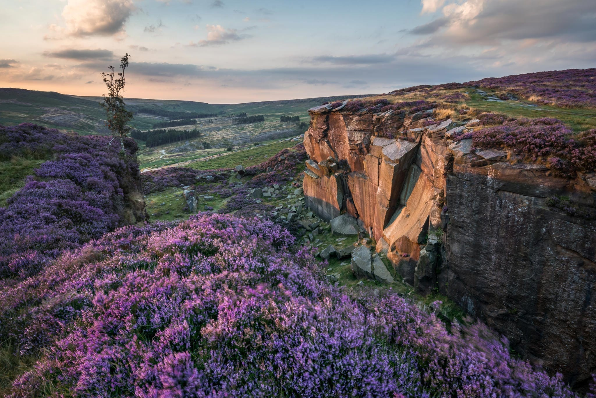 Burbage Rocks Heather Quarry - Heather in the Peak District Photography Workshop