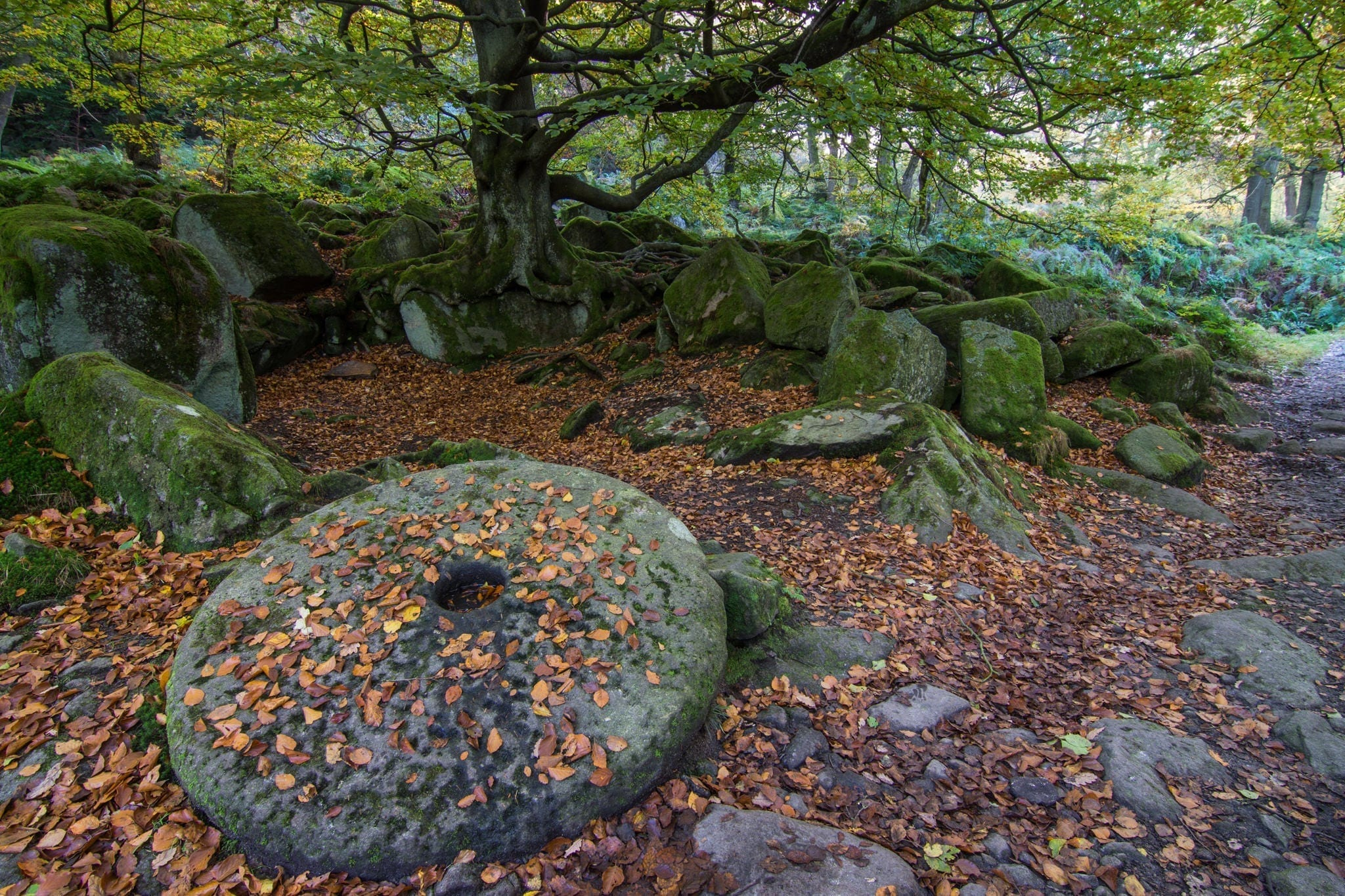 Padley Gorge Millstone and Tree - Gritstone Edges Peak District Photography Workshop
