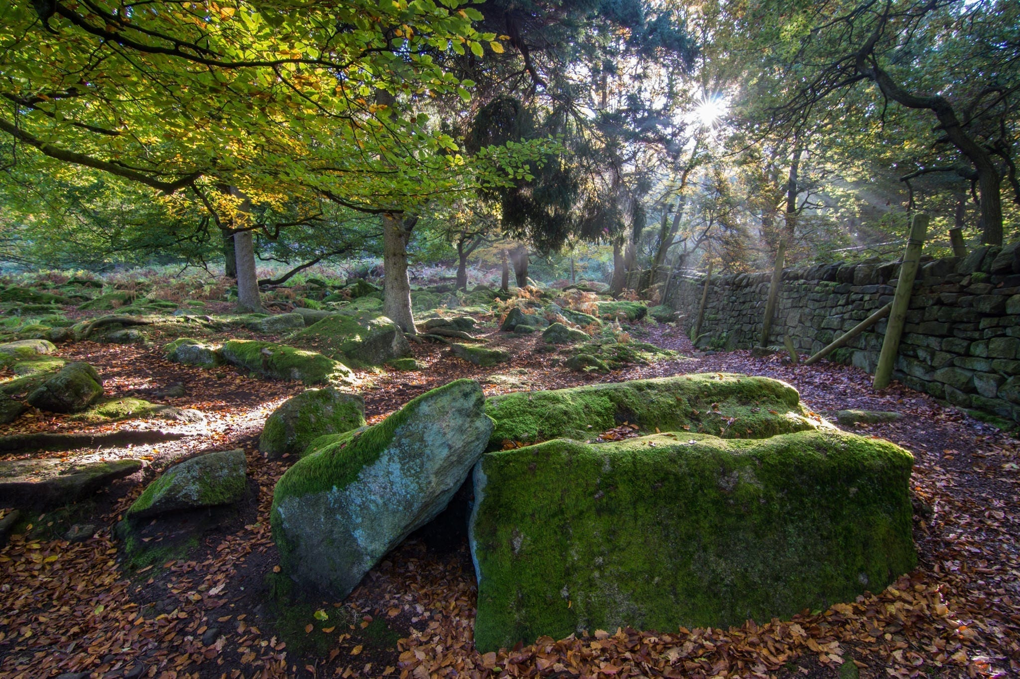 Padley Gorge Mist Rays - Gritstone Edges Peak District Photography Workshop