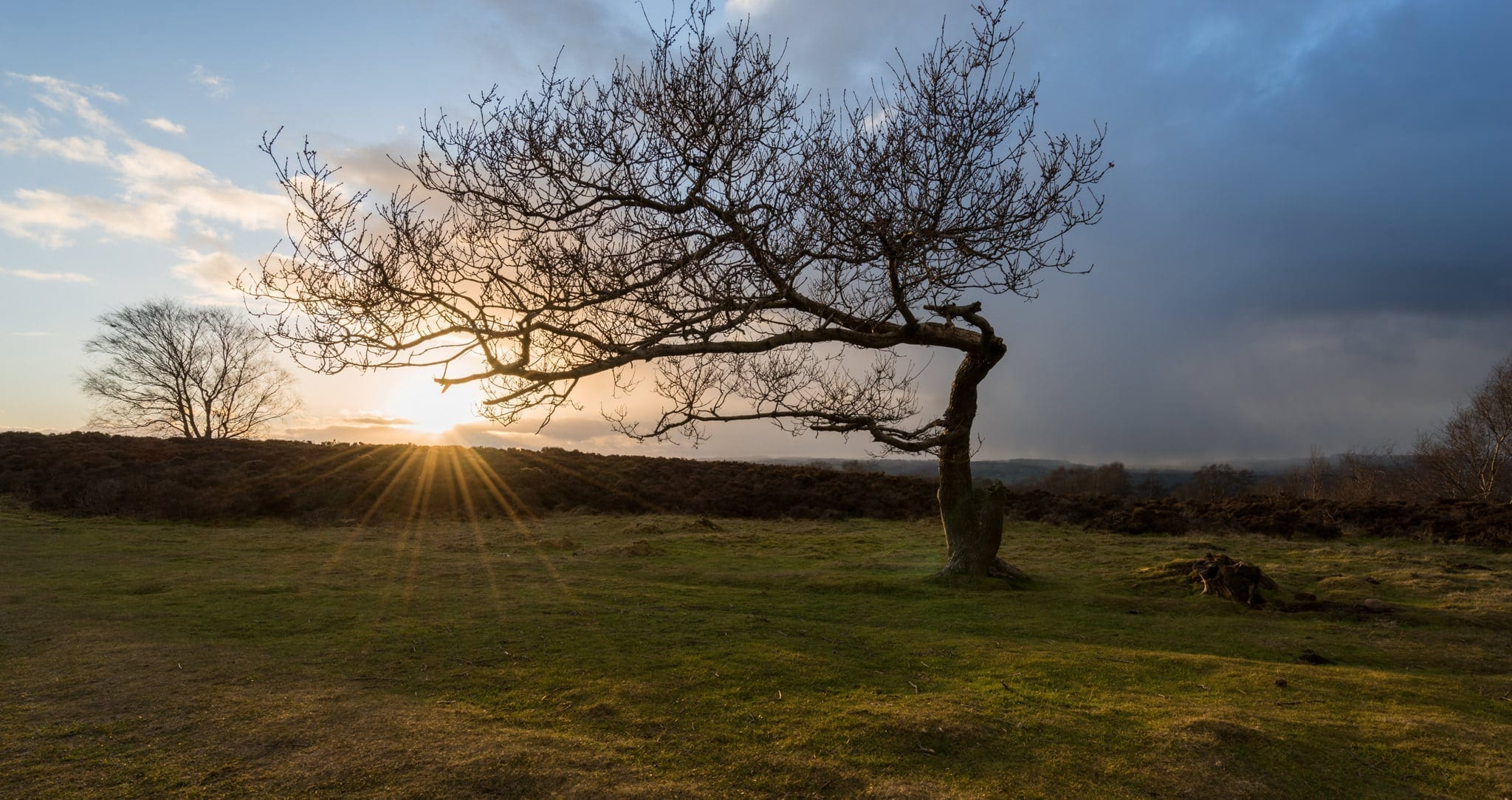 Stanton Moor Leaning Tree - Photographing the Peak District in Winter Photography Workshop