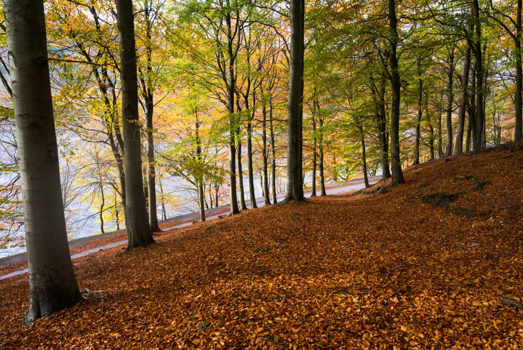 Derwent Reservoir Autumn - Photography Workshop
