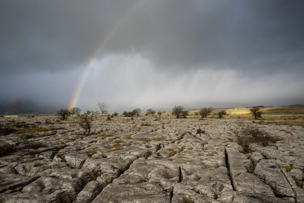Southerscale Scars Rainbow