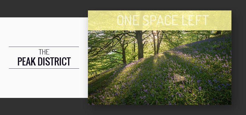 Bluebells Peak District Photography Workshop