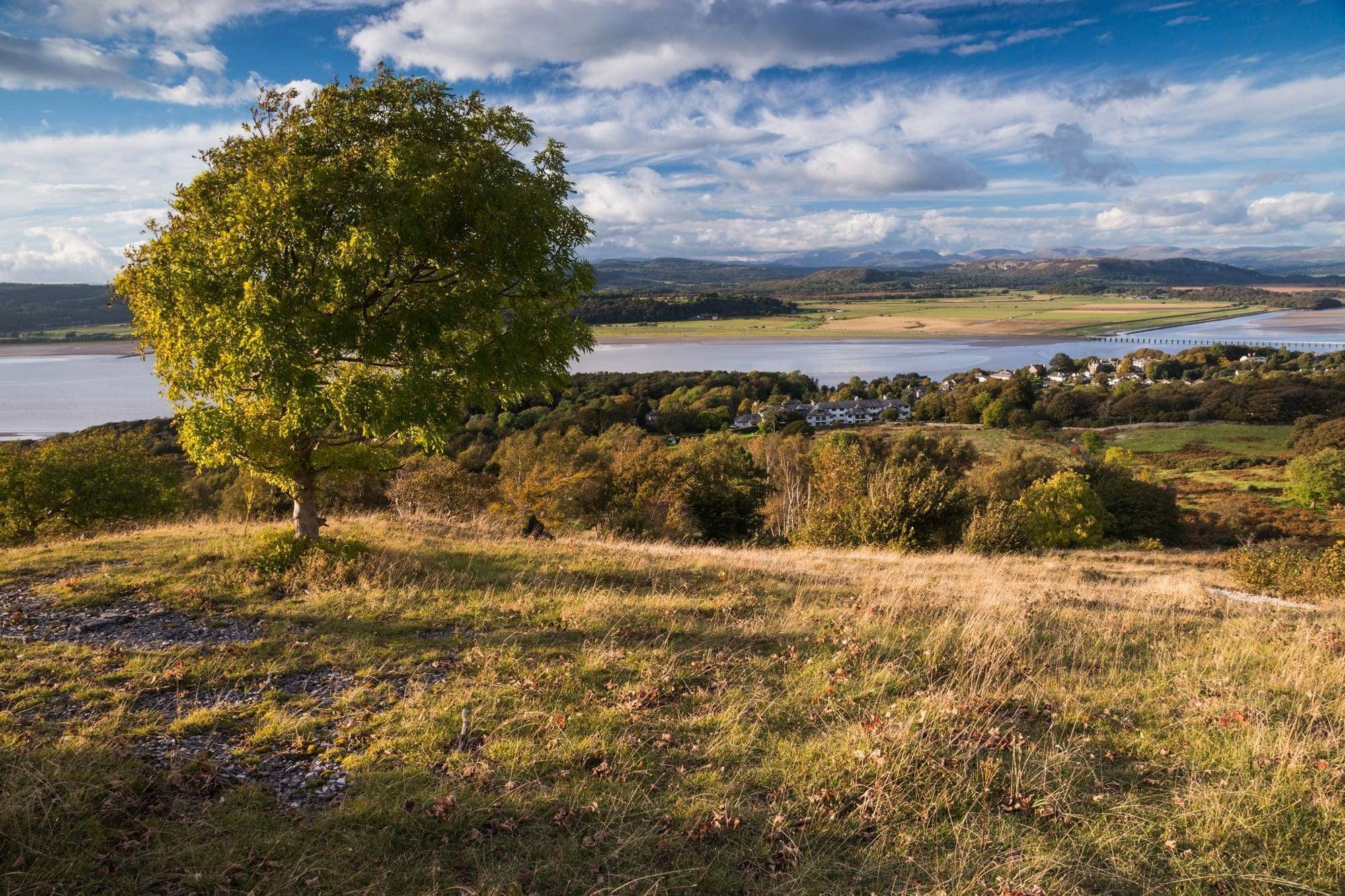 Arnside Knott Trees and the Lake District - Lancashire Photography