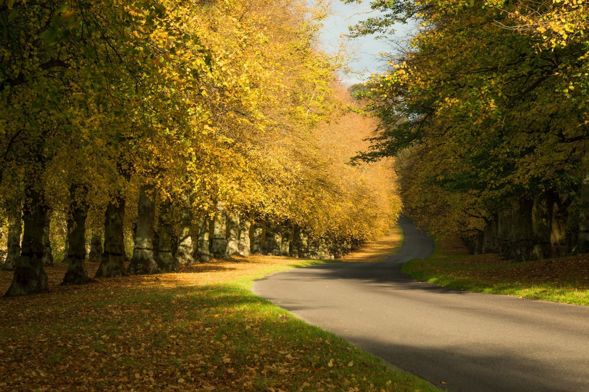 Clumber Park Autumn - Nottinghamshire Photography