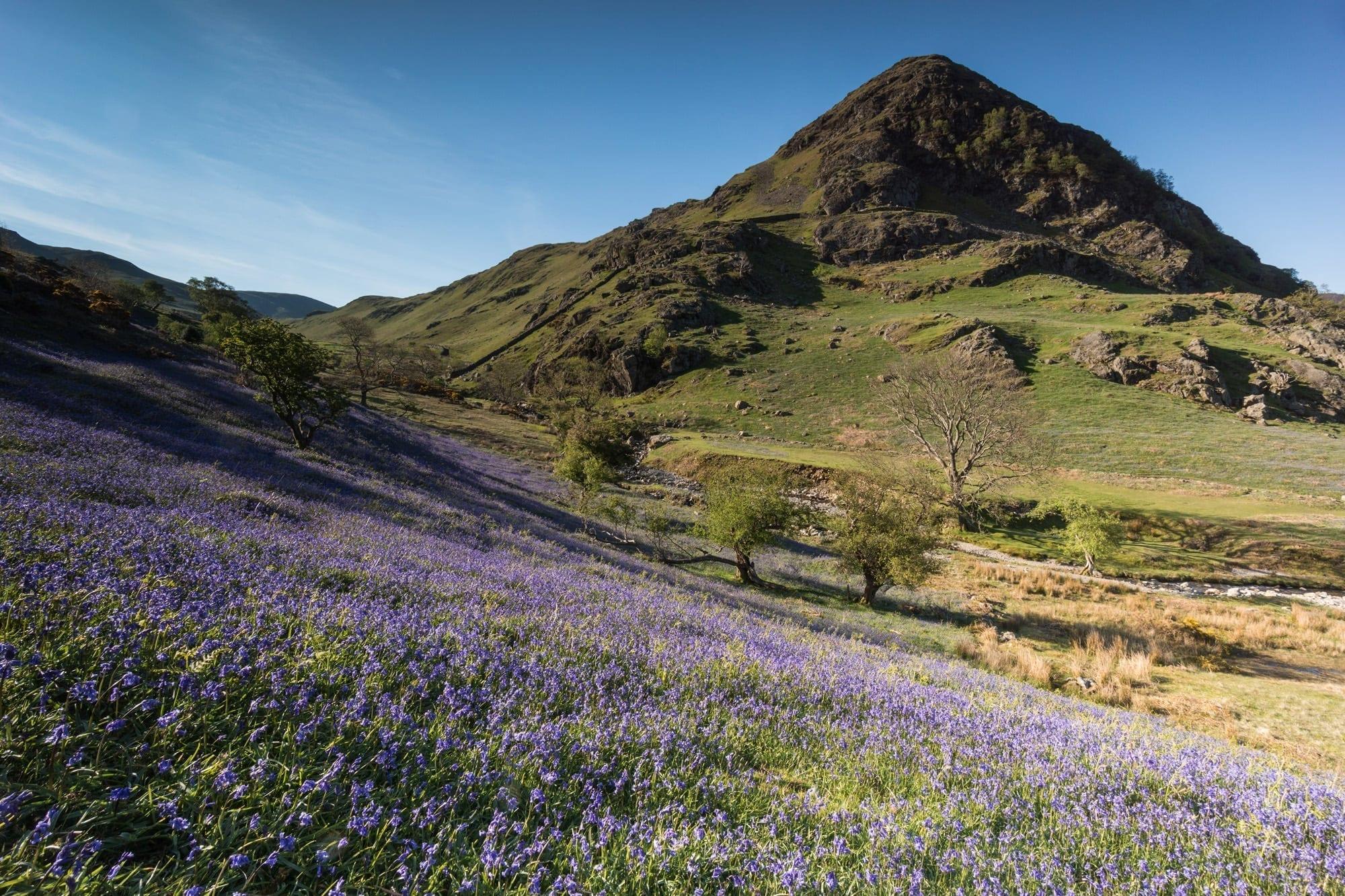 Rannerdale Bluebells - Lake District Photography
