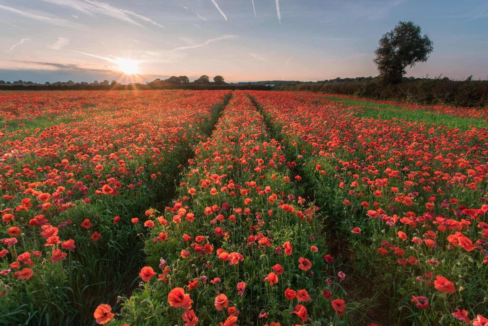Watnall Poppies Sunset - Nottinghamshire Photography