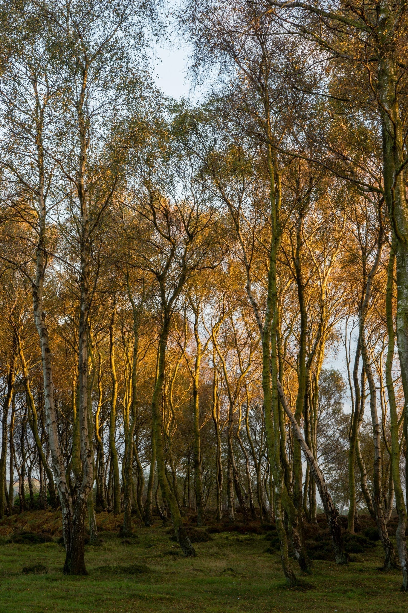Autumn Birch Trees - Autumn in the Peak District Photography Workshop