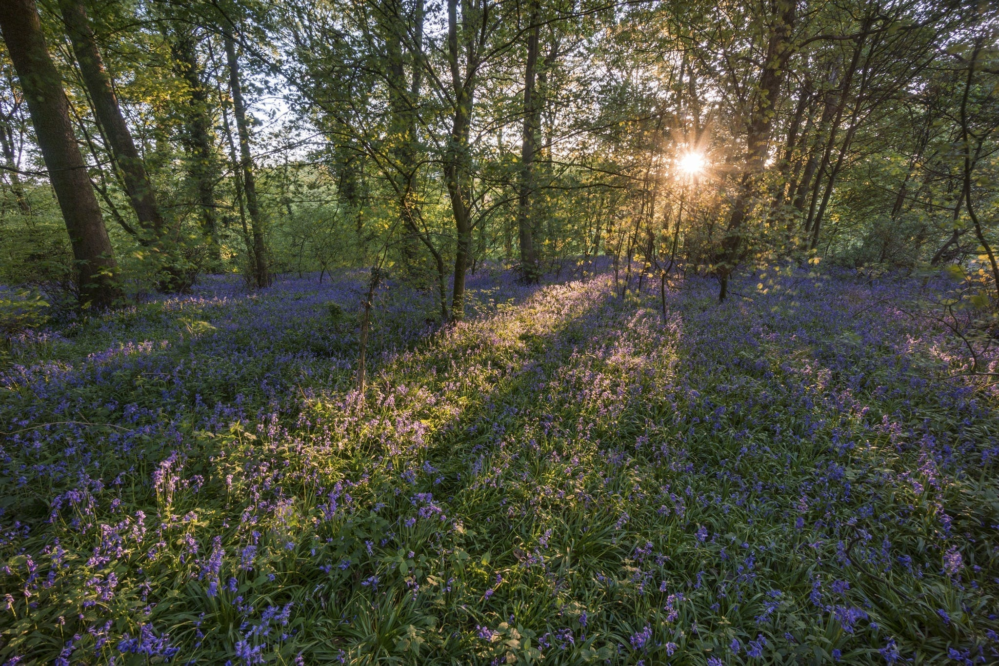 Bluebell Woods Sunset - Bluebells and Woodlands Photography Workshop