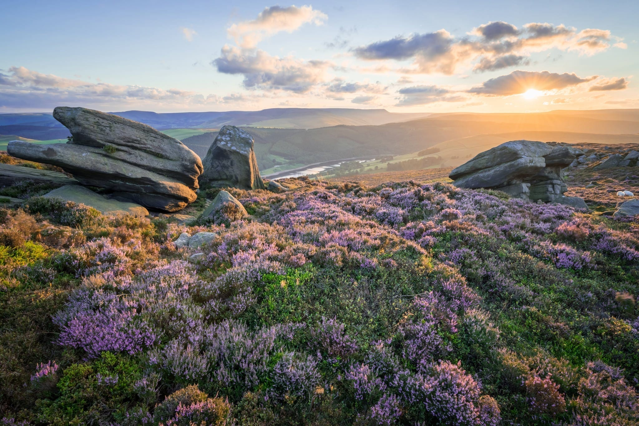White Tor Heather Sunset - Heather in the Peak District Workshop